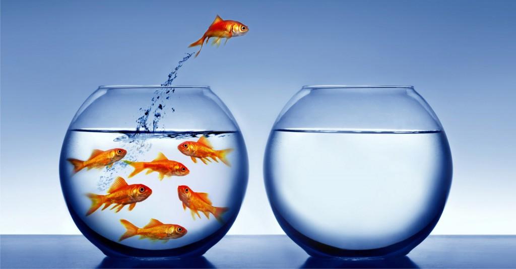 goldfish-freedom